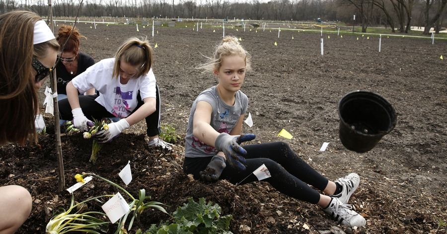Katelynm Batogowski, 12, of Naperville, tosses a container Thursday after helping her fellow Washington Junior High School classmates and Girl Scouts plant a fruit tree guild at the Ron Ory Community Garden Plots in Naperville.