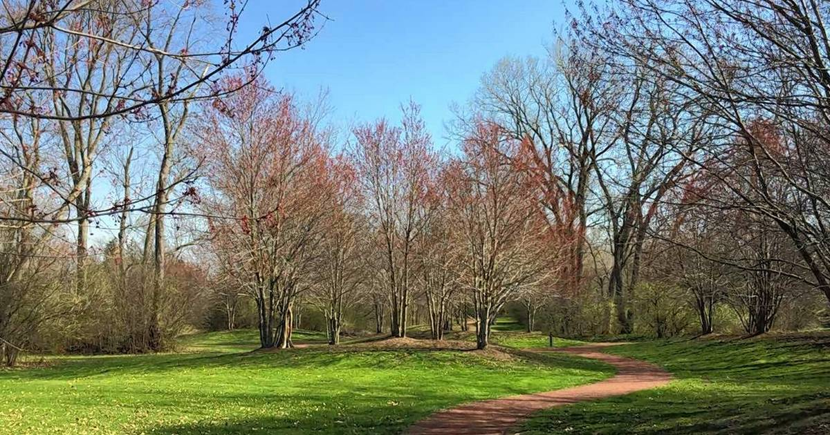 Wheaton Park District Wants To Build Disc Golf Course On Forest Land