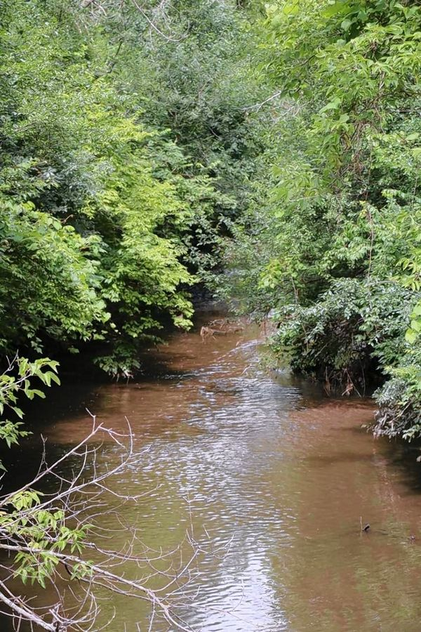 Commissioners with the Forest Preserve District of DuPage are expected to approve an intergovernmental agreement with the Illinois State Toll Highway Authority to restore a stretch of Spring Brook Creek that runs through Blackwell Forest Preserve near Warrenville.