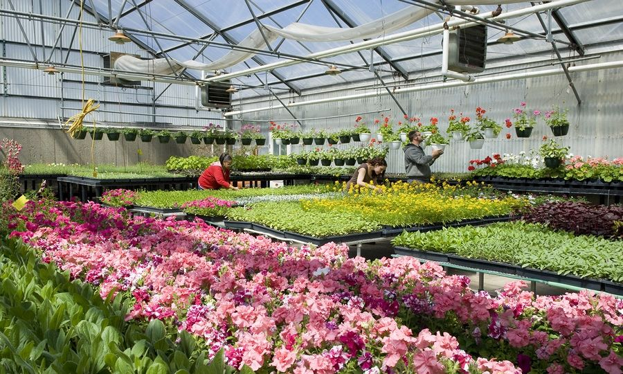 The College of Lake County's annual plant sale fundraiser will take place May 10 and 11 inside the horticulture greenhouse on the Grayslake Campus.