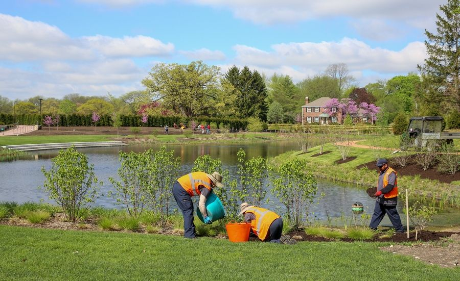 "Crews put the finishing touches Cantigny's new pond garden, constructed as part of ""Project New Leaf,"" an ongoing transformation of the suburban getaway in Wheaton."