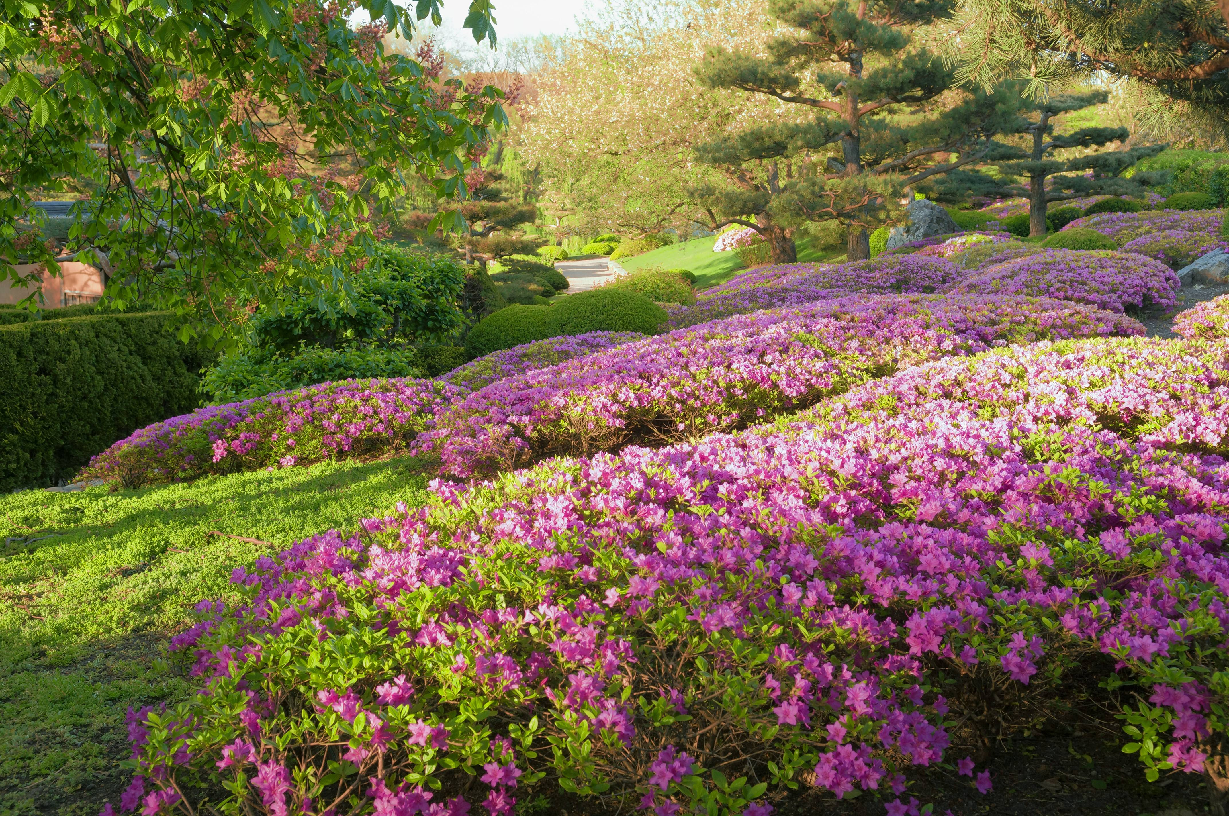 Azaleas are examples of plants that can benefit from sulfur applications in the Chicago area.