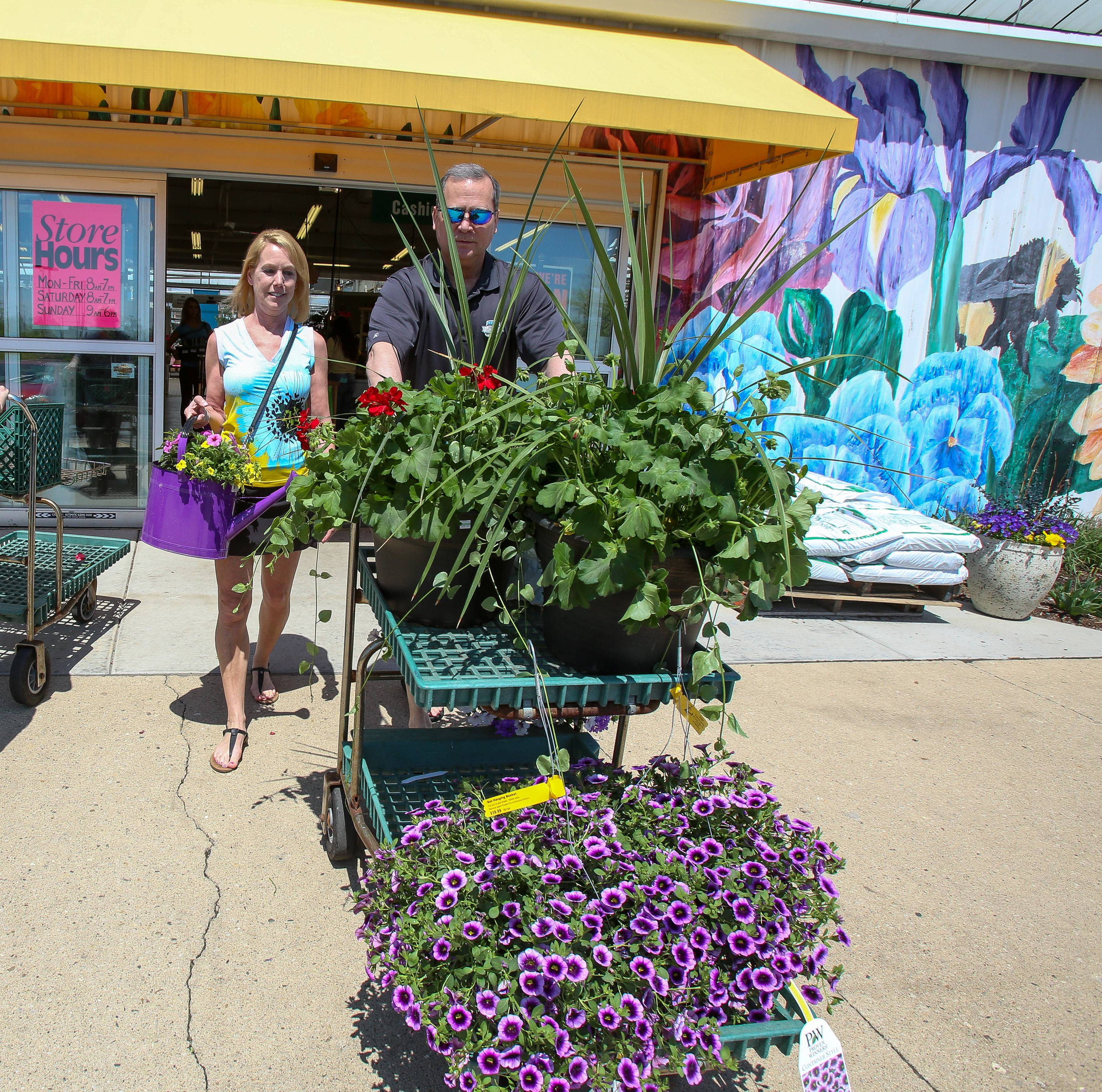 Sue Kahanie and John Lopuszanski of Hoffman Estates leave with plants and flowers from the Knupper Nursery & Landscape in Palatine on Wednesday. After 88 years in business, the Northwest suburban mainstay is closing June 16.