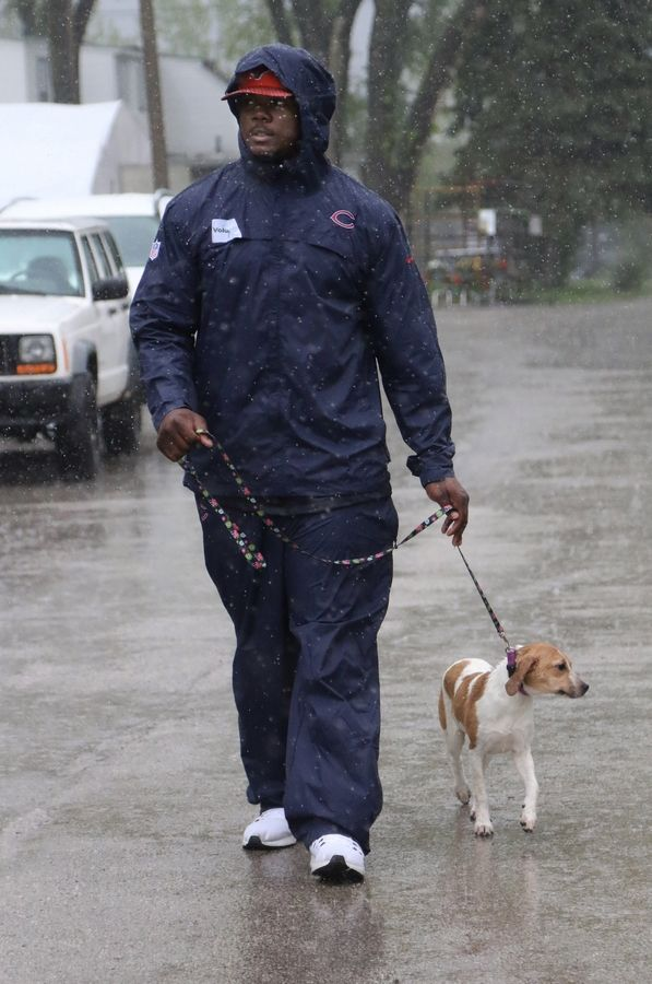 Chicago Bears rookie Bilal Nichols walks a puppy in the rain as he helps out at the pet shop Monday at Lambs Farm in Green Oaks.
