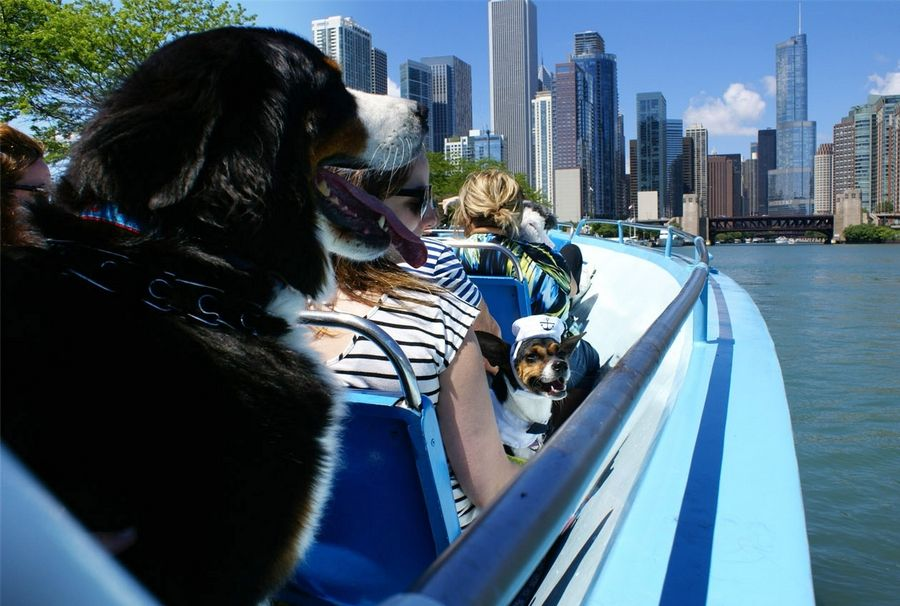 Dogs enjoy Mercury's Canine Cruise on Chicago's waterways.