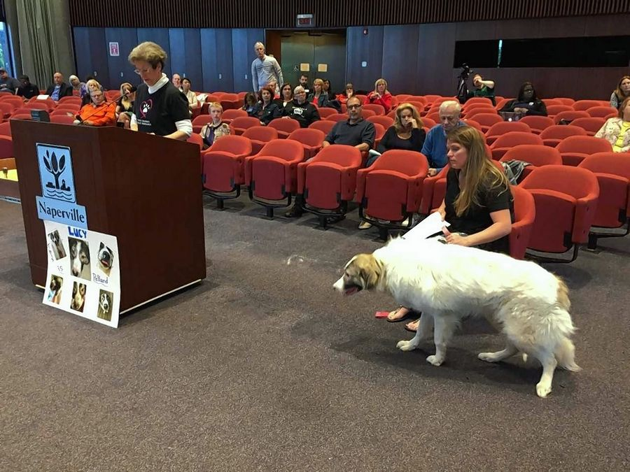 Naperville nearly ready for action on pet sales ordinance