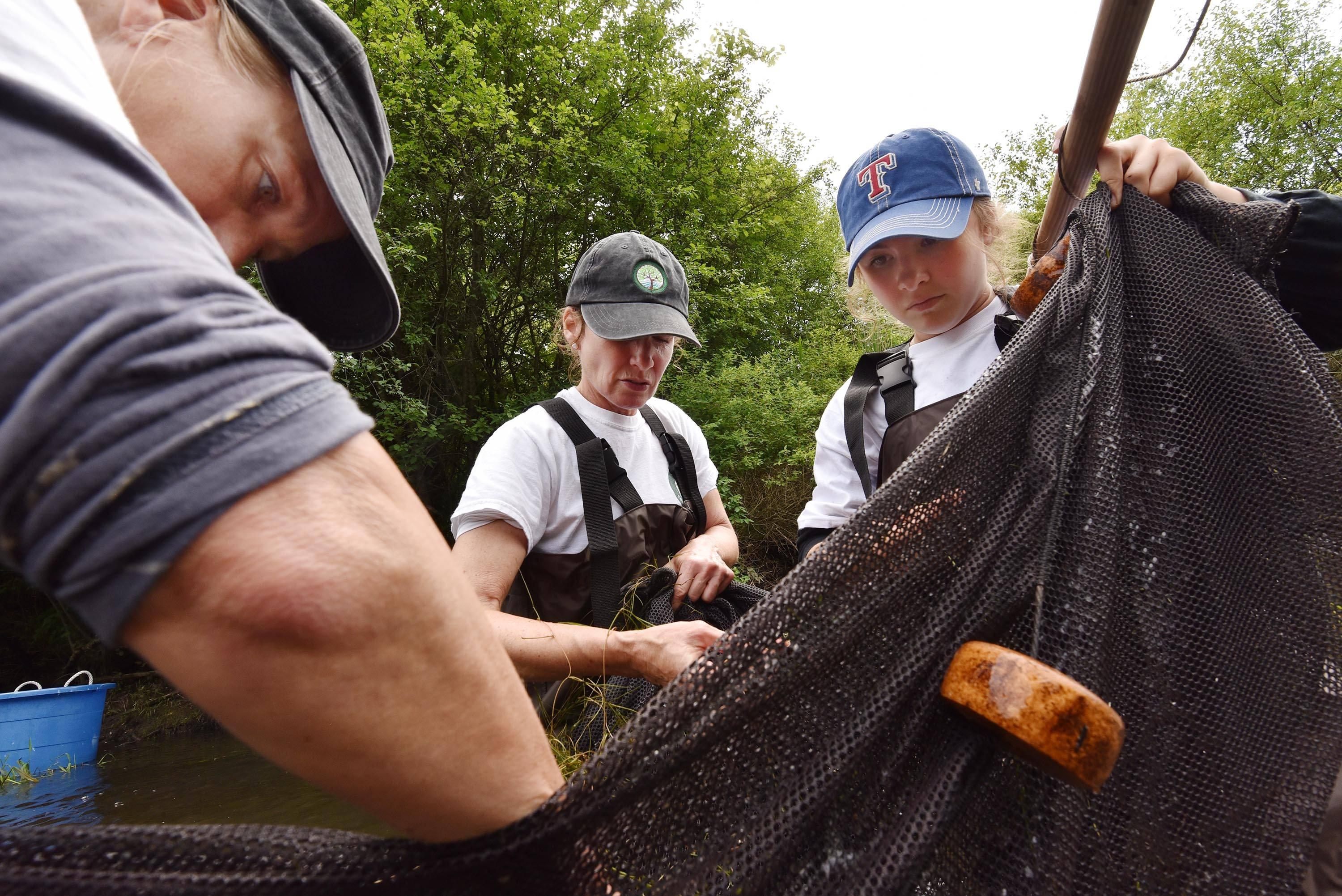 Lisa Woolford, executive director of Barrington Area Conservation Trust, left, and Susan Lenz, the group's director of community engagement and education, and Fremd High School sophomore Nicole Hentges inspect their net to see what they collected from a creek on Sanfilippo estate in Barrington Hills on Tuesday.