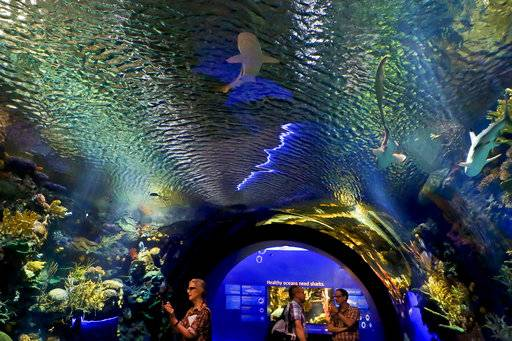 Sandy-ravaged aquarium opens splashy new shark exhibit