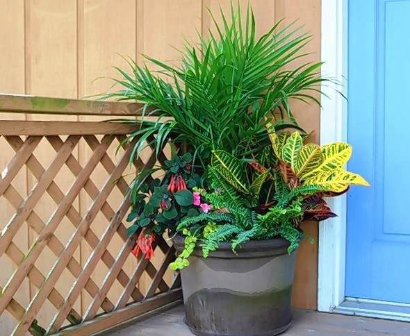 A Palm Is The Backdrop For A Container With Tropical Looking Shade Plants.