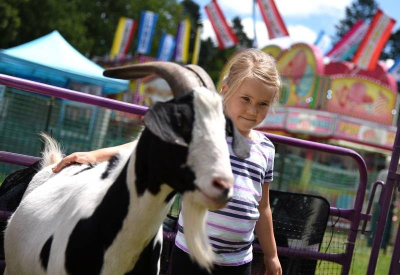 Juliane Claerhout, of Cary, makes friends with a goat at the petting zoo during a previous year's Lakeside Festival in Crystal Lake.