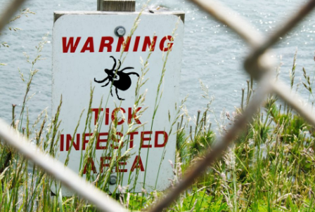 Infectious disease specialist warns tick-borne diseases are