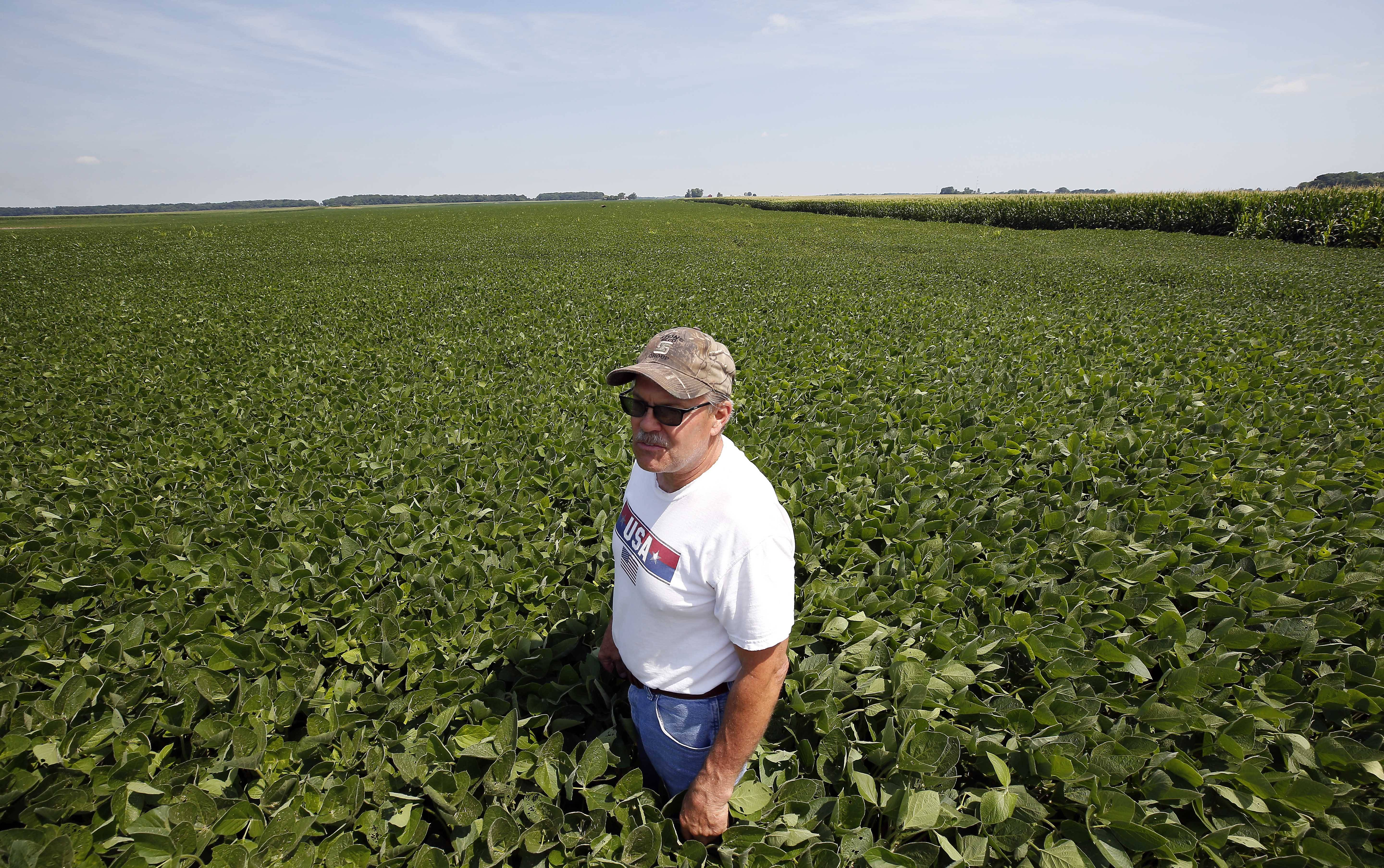 Joe White of Elburn, who farms about 500 acres of soybeans, has mixed feelings about how the soybean tariffs and trade talks will affect the suburbs. Hear more from him at dailyherald.com/video.