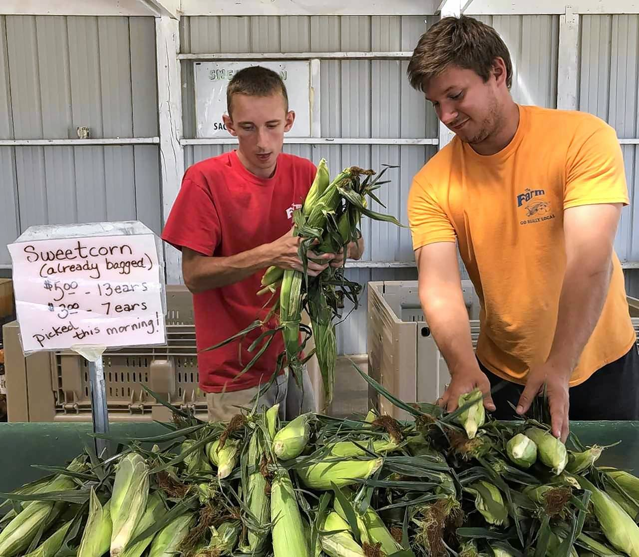 The first day of selling sweet corn is like a holiday at The Farm stand in Carol Stream. The corn generally is ready to picked the week after July Fourth. And customers are ready before then.