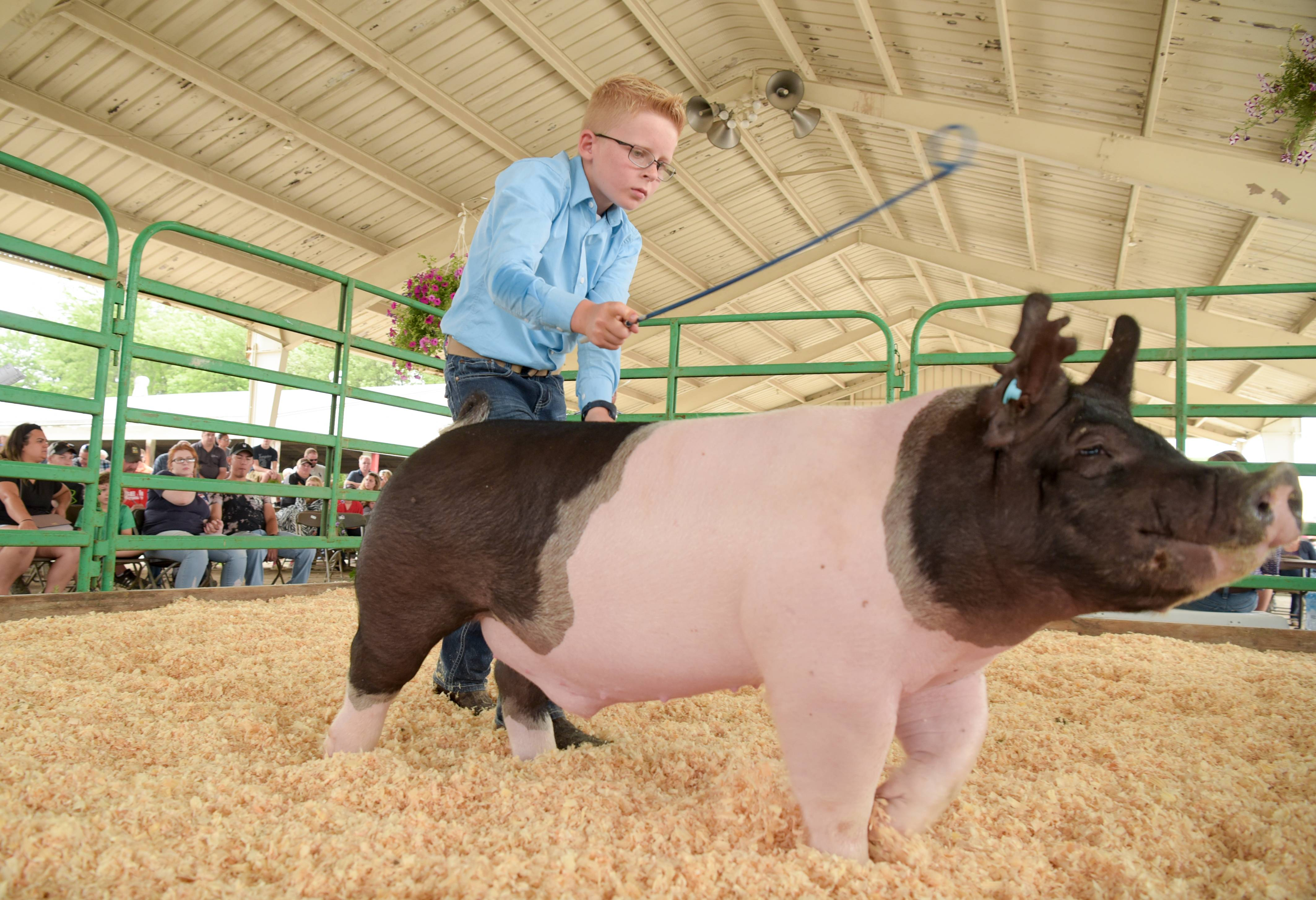 Ethan Stohlquist, 10, of Poplar Grove shows his Grand Champion Pen of Barrows hog Sunday during the auction at the 2018 Kane County Fair in St. Charles. The 150th edition of the annual fair wrapped up Sunday.