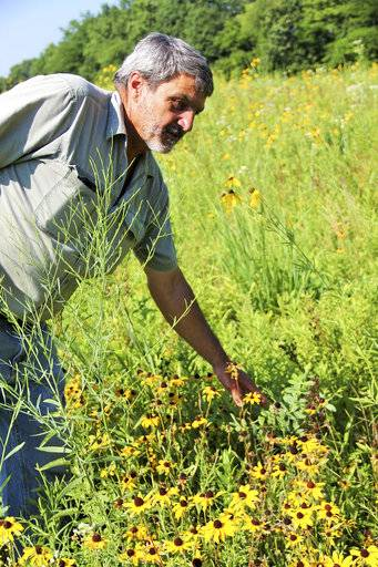 In this July 10, 2018 photo, Jim Barker walks among the native prairie flowers he has planted  on his farm in McLeansboro, Ill. Rather than planting set-aside land in fescue, Barker has transformed his property into small patches of prairie that resemble what Hamilton County would have looked like before modern agriculture. (Les Winkeler/The Southern, via AP)