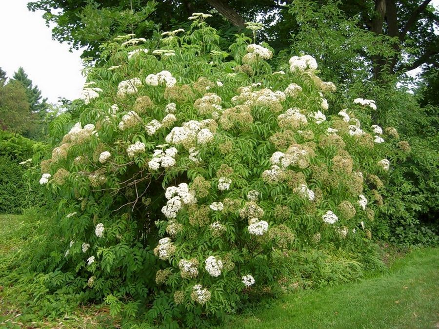 Order native tree, shrub during conservation group's fall sale