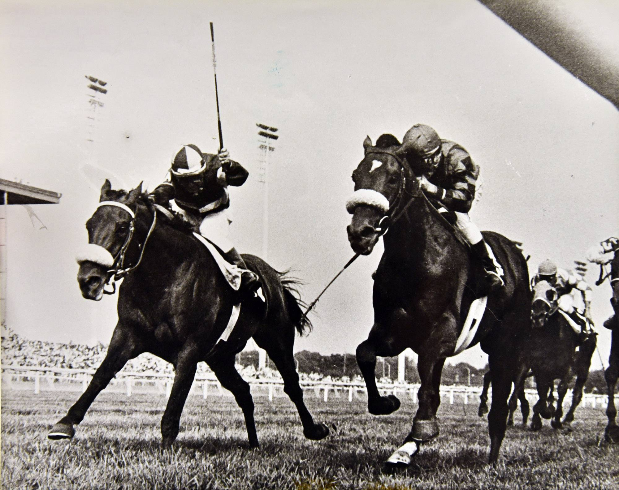 Legendary racehorse John Henry wins the first Budweiser Million in 1981 at The Arlington International Racecourse.