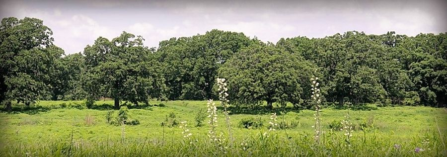Corron Farm features a savanna trail with bur oaks and white oaks, and mesic and wet prairies.