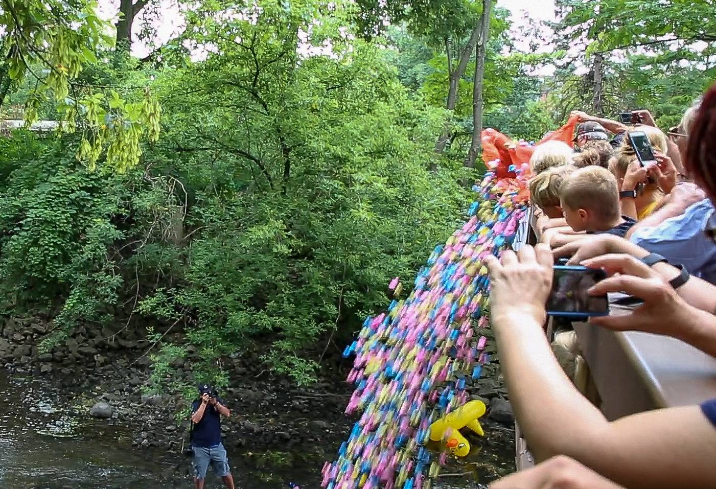 The third annual Riverwalk Duck Race begins Wednesday morning in Naperville as 2,000 colorful quackers are dumped into the west branch of the DuPage River all at once.