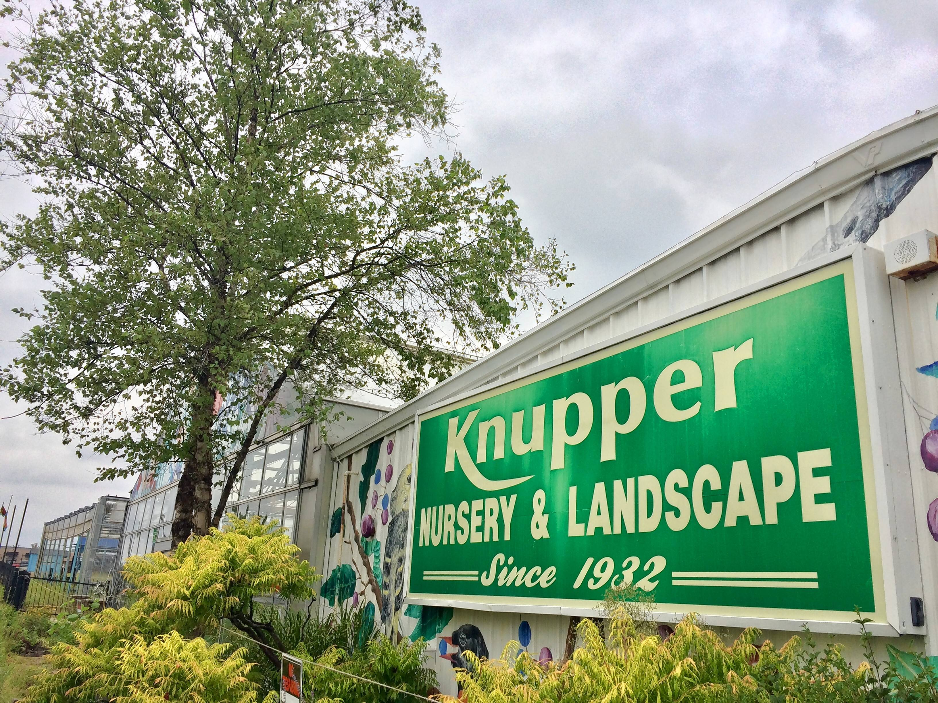 After ending an 86-year run in June, Knupper Nursery and Landscape will make a comeback of sorts next year on the same Rand Road site, but with a different owner and format.