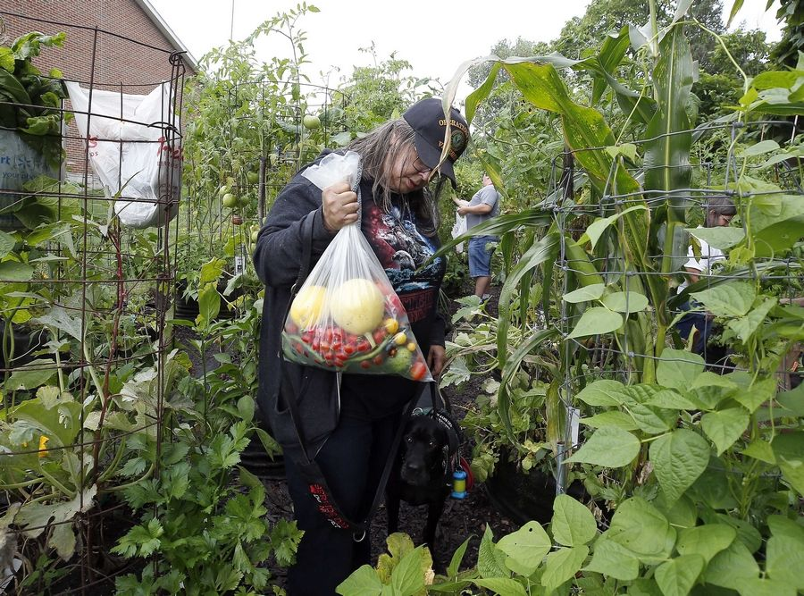 Army veteran Laura Benevelli of Burbank holds a giant bag of vegetables that she harvested Saturday at the gardens at Cantigny Park in Wheaton as part of a program for veterans run by master gardeners.