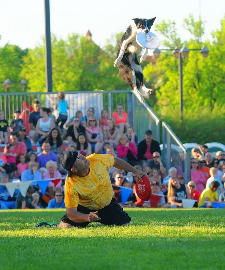 Mark Faragoi and Riley show their stuff at a previous disc dog competition.