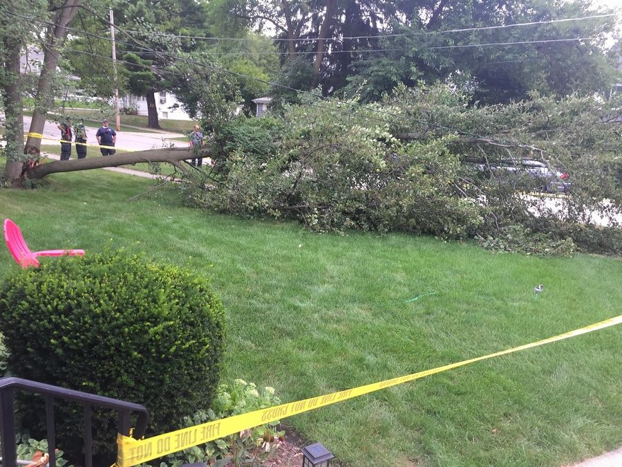 Glen Ellyn firefighters and village forestry officials responded to the tree crash on the morning of Aug. 15.