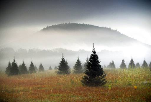 file in this sept 27 2017 file photo fog drifts through a - Christmas Tree Farms For Sale