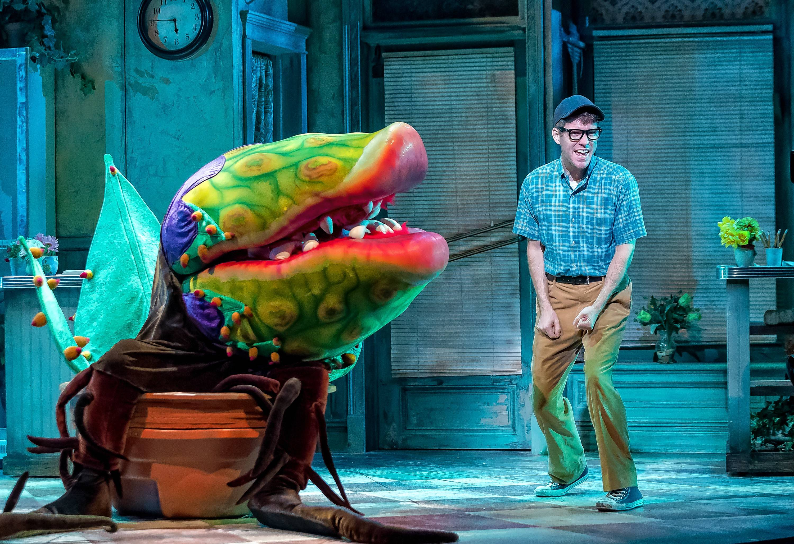 "The flesh-eating plant Audrey II convinces Seymour (Will Lidke) to commit dastardly deeds in ""Little Shop of Horrors"" at Drury Lane Theatre."