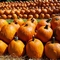 15 suburban pumpkin patches to get you pumped for autumn