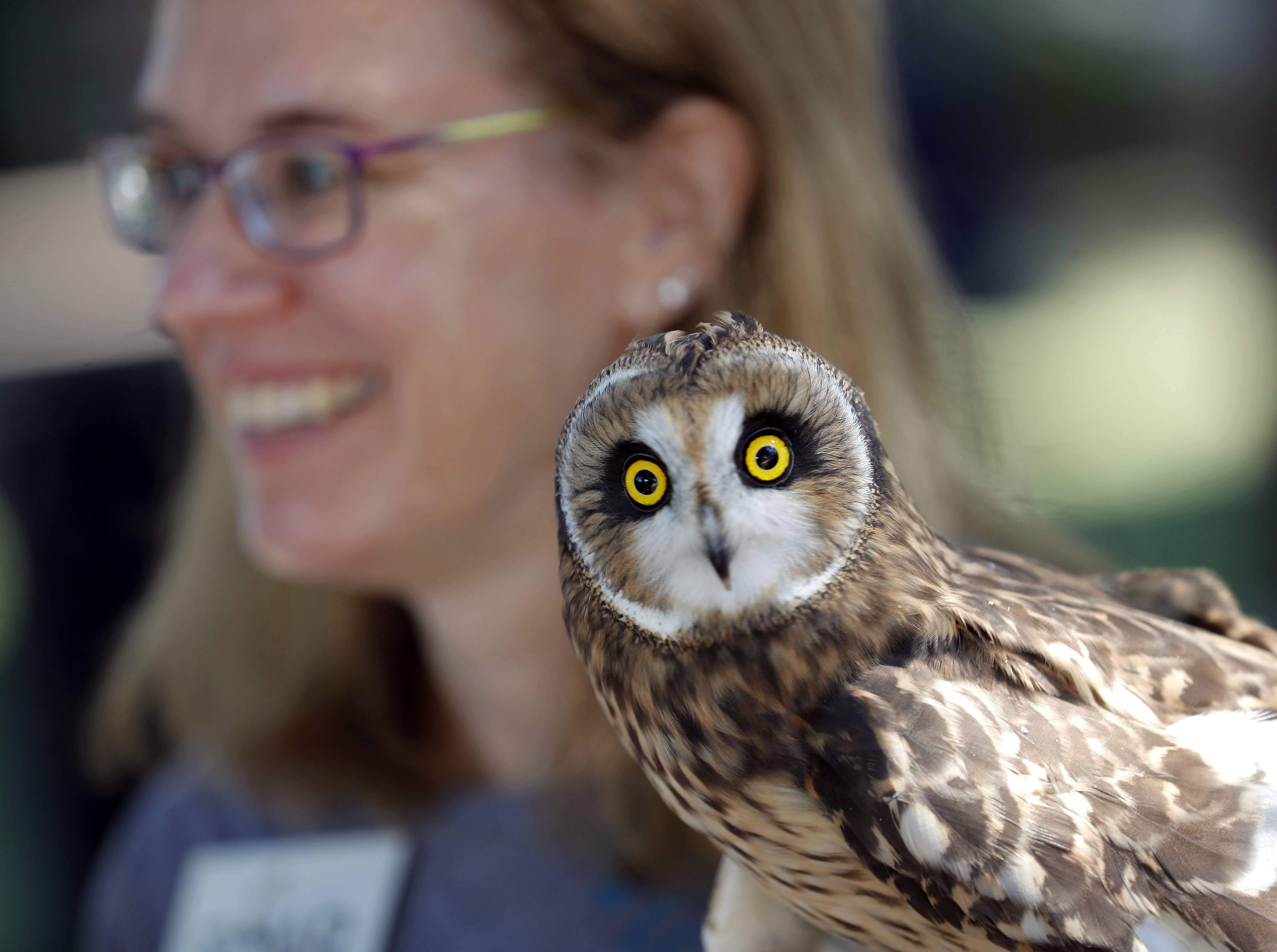 Marla Jedlicka, of S.O.A.R. (Save Our American Raptors) holds a host eared owl during the 24th annual Native American Harvest Pow Wow at Naper Settlement in Naperville Sunday, Sept. 23, 2018.
