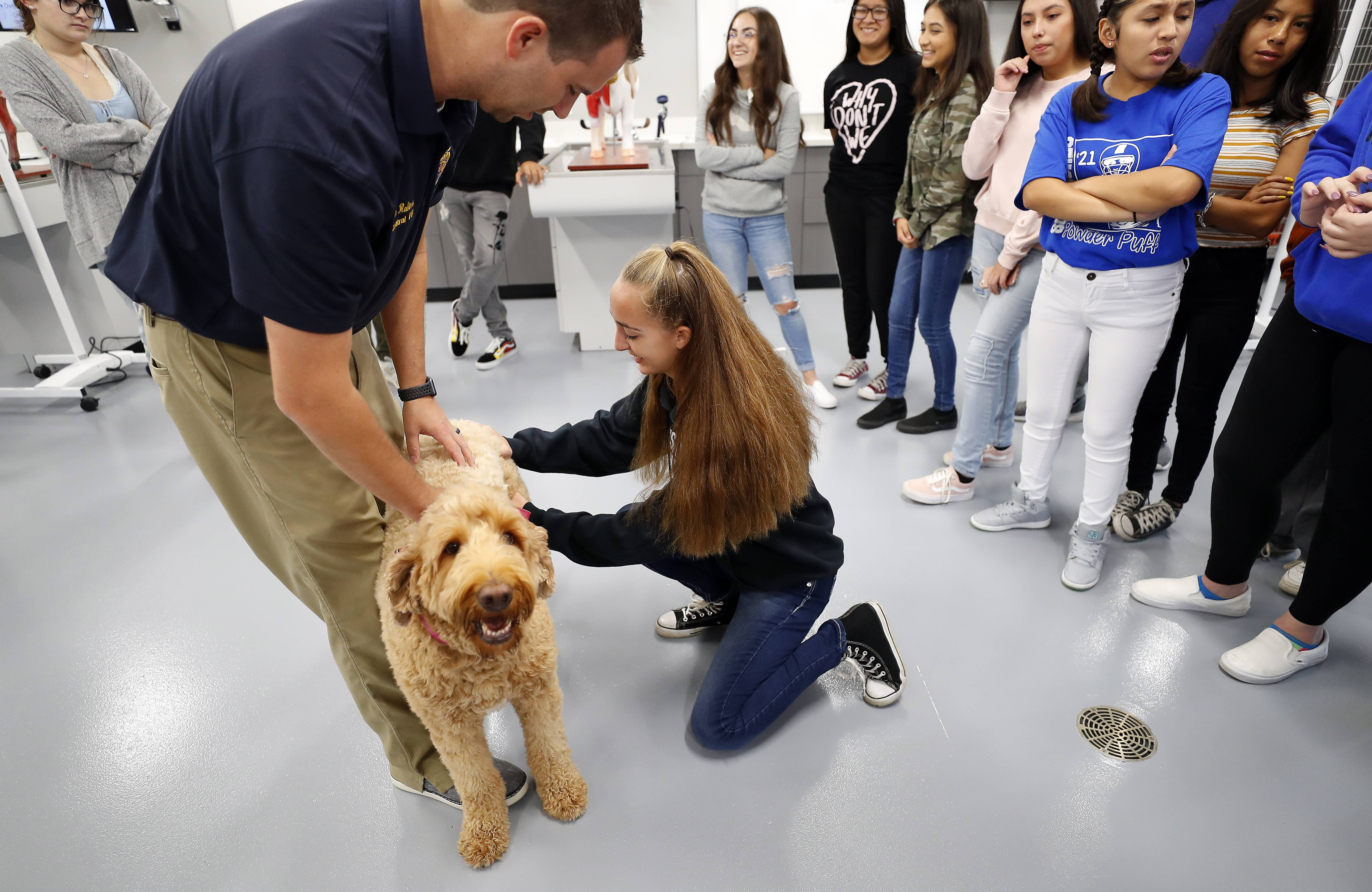 Larkin High School sophomore Alexa Kimsey, of Elgin, works with instructor Ryan Robinson to find a pulse on a labradoodle in the new veterinary science lab at Central High School in Kane County.