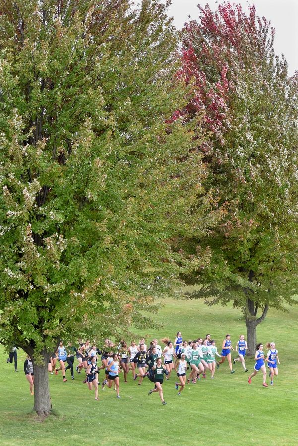 Katelynne Hart, middle, of Glenbard West High School, leads the girls race at the start of the Class 3A Lake Park cross country regional meet Saturday in Roselle.