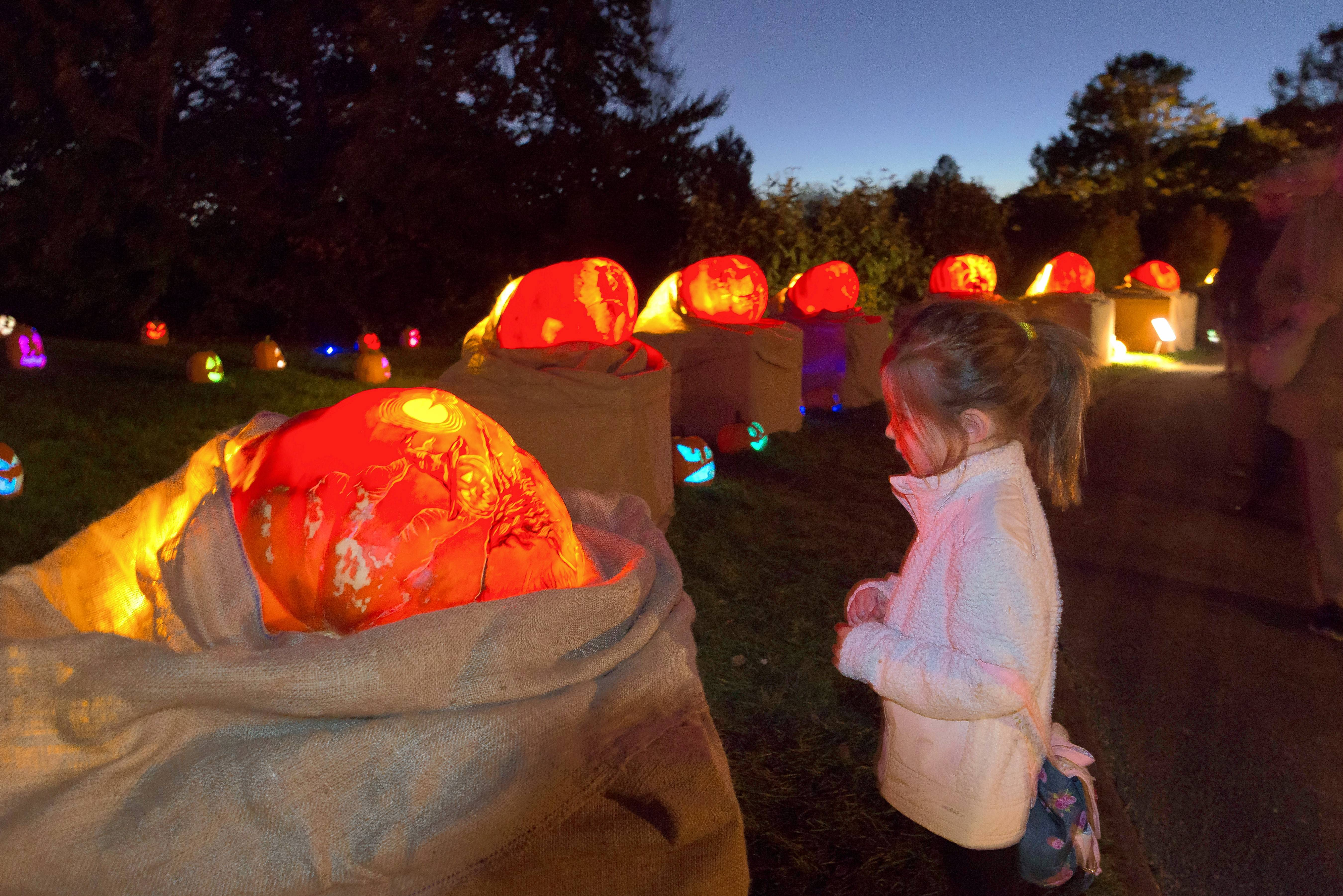 Night of 1,000 Jack-o'-Lanterns returns to the Chicago Botanic Garden Wednesday through Sunday, Oct. 24-28.