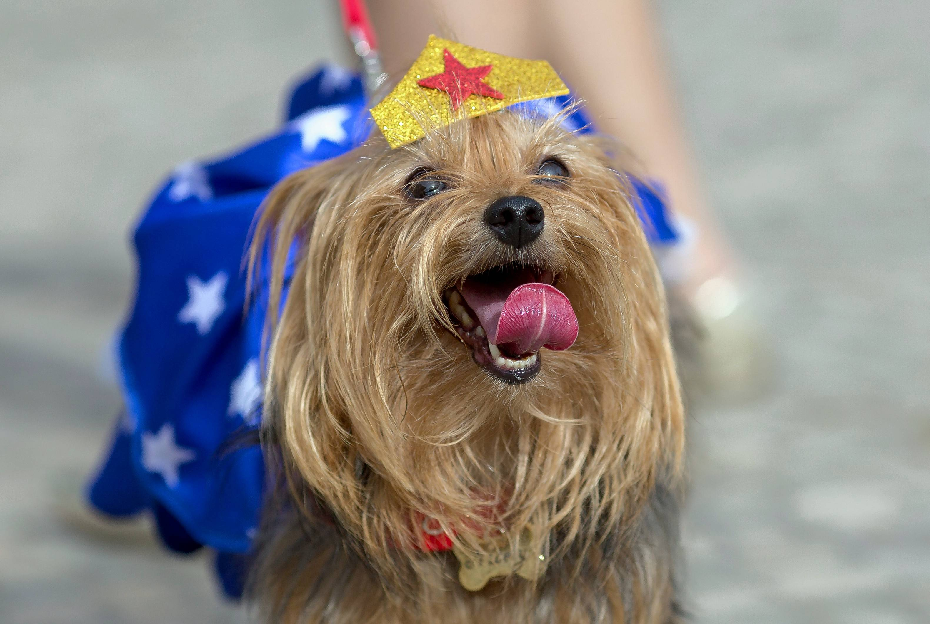 Dress up your dogs for Geneva's Howl O' Ween Dog Parade on Saturday, Oct. 27, and Long Grove's Halloween Hound Parade on Sunday, Oct. 28.
