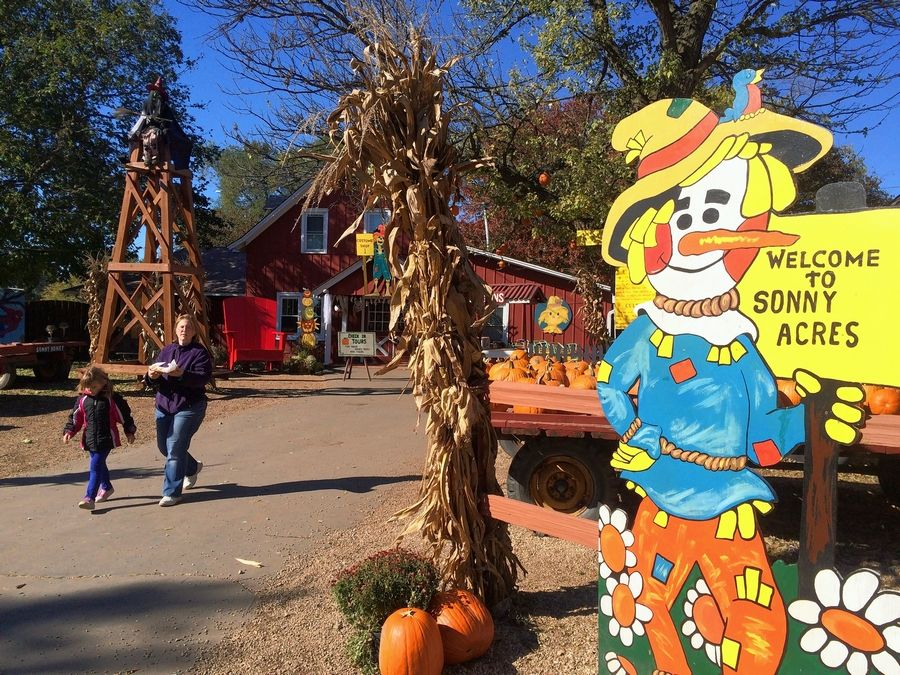 A painted scarecrow greets visitors at the entrance to Sonny Acres Tuesday morning.