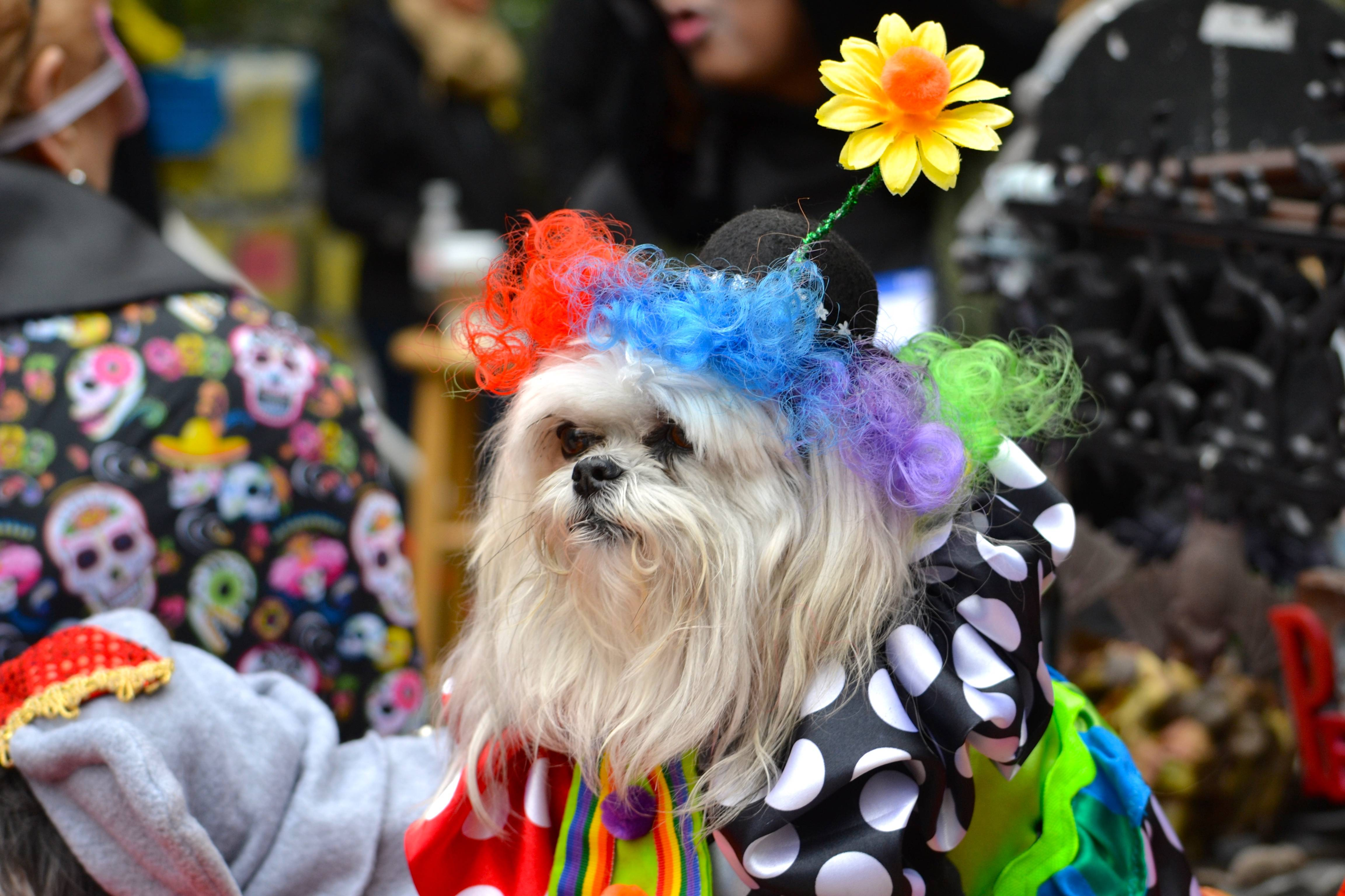 At Long Grove's Halloween Hound Parade, prizes will be awarded in categories like best owner-pet costumes, best costumed pet duo and more.