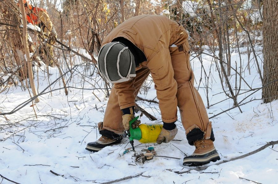 Cut down invasive buckthorn trees at ground level and quickly treat the stump with an herbicide to kill the root system.