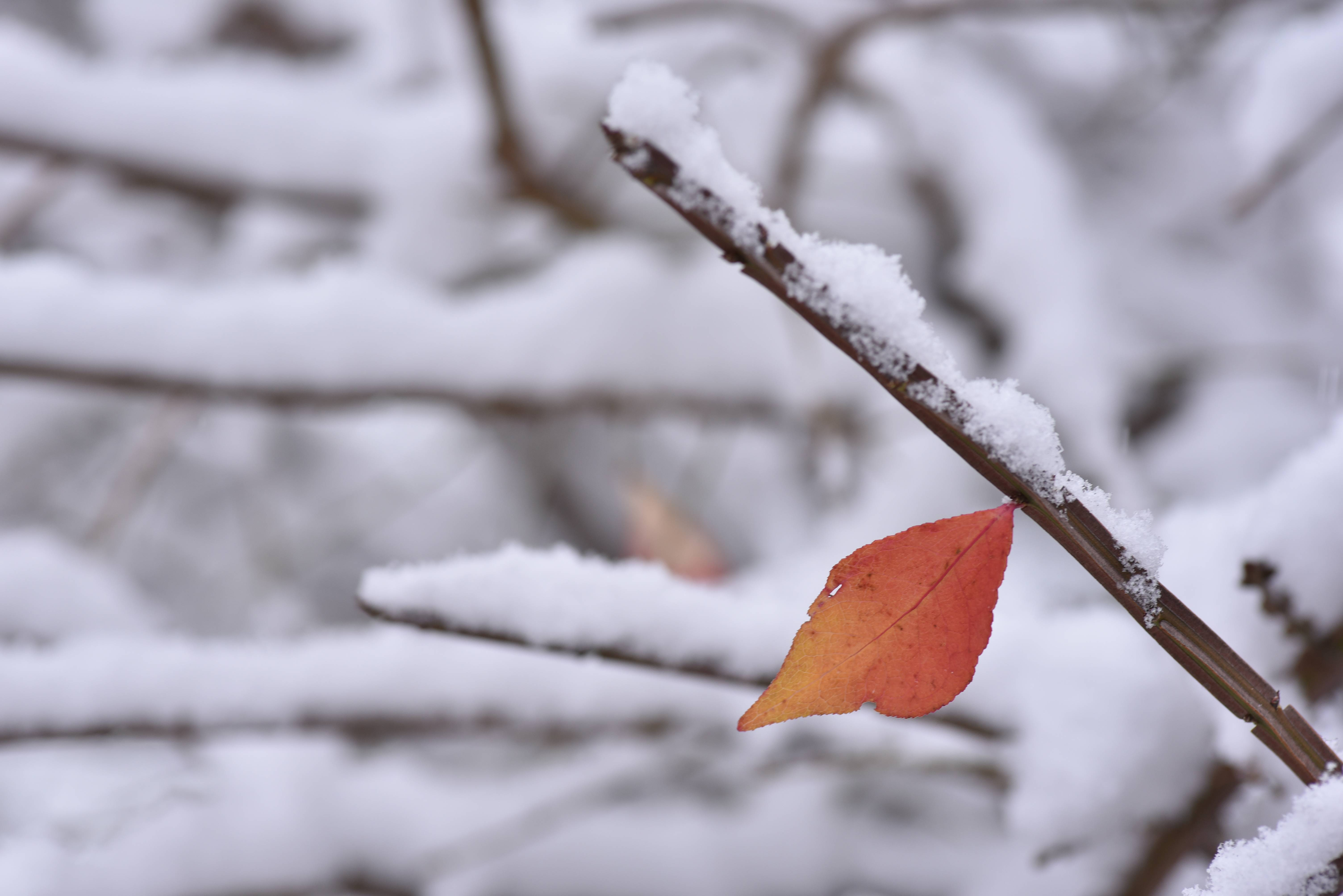 An early snow blanketed colorful leaves on bushes and trees in Geneva Friday morning but left area roads mostly wet.