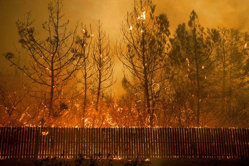 Flames climb trees as the Camp Fire tears through Paradise, Calif., on Thursday, Nov. 8.