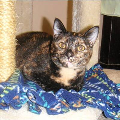 Ginger is a small, 4-year-old, female tortie with a tan chest. Ginger can be quite playful and loves chasing after little coiled plastic springs. Come in and meet Ginger. She just might be the right fit for you.