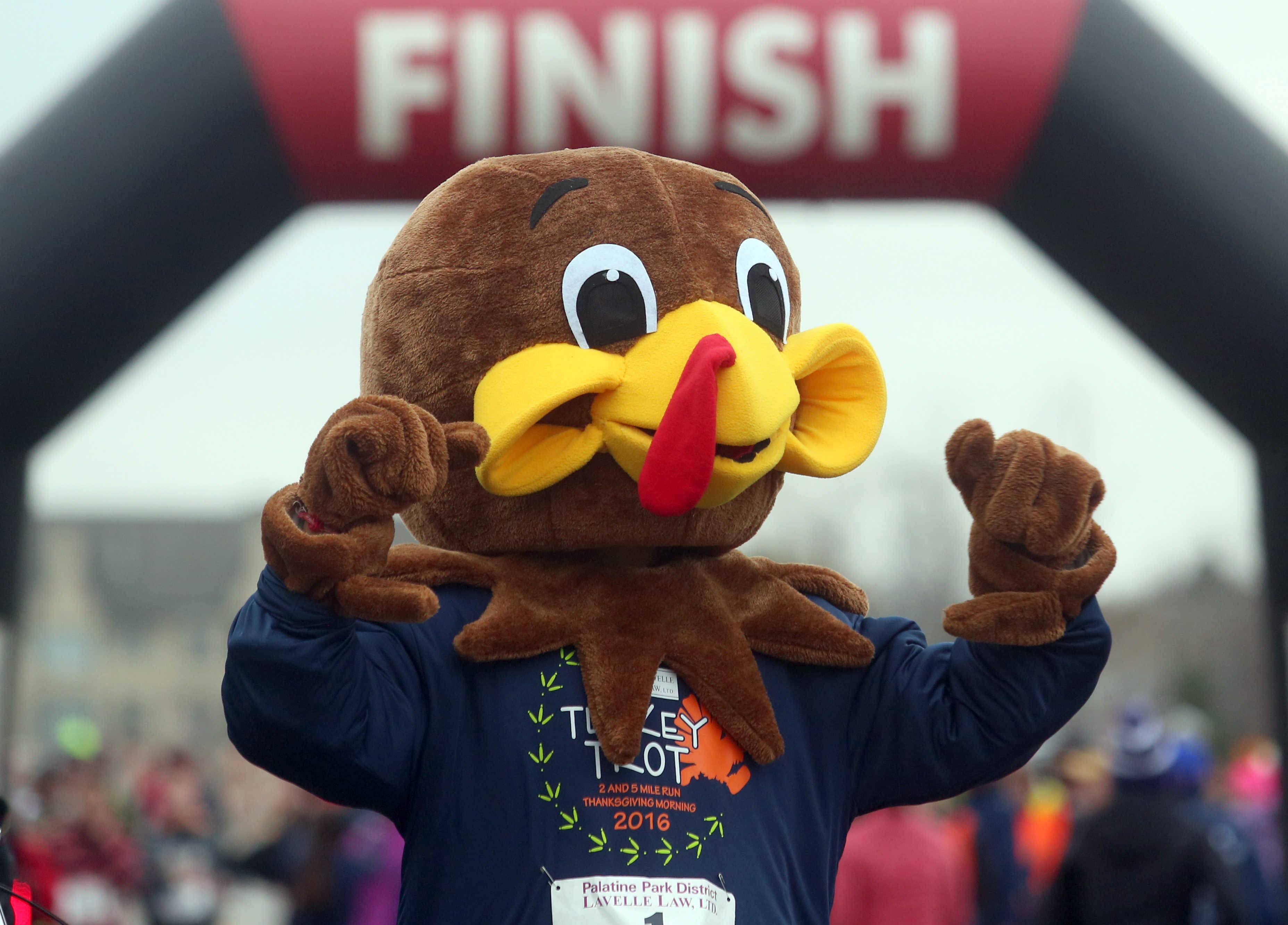 A turkey mascot encourages runners at the finish of the two-mile run during the annual Turkey Trot at Harper College in Palatine.