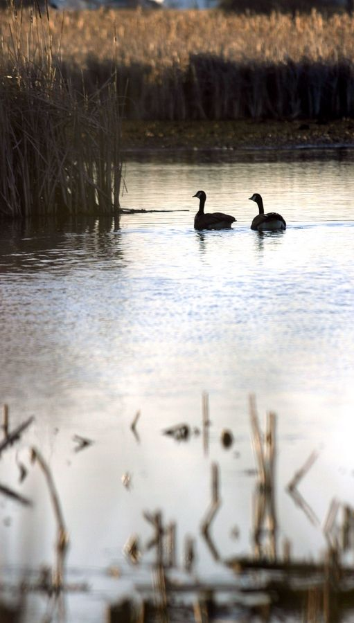 The McHenry County Conservation District welcomes nature lovers and outdoor enthusiasts to join in a Restoration Day at Exner Marsh Conservation Area in Lake in the Hills.