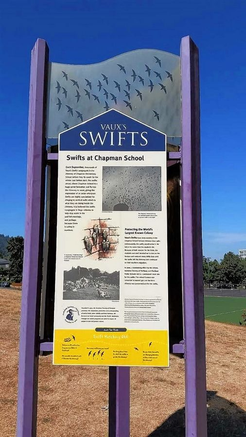 A display outside Chapman School tells the story for swift watchers who gather every evening in September.