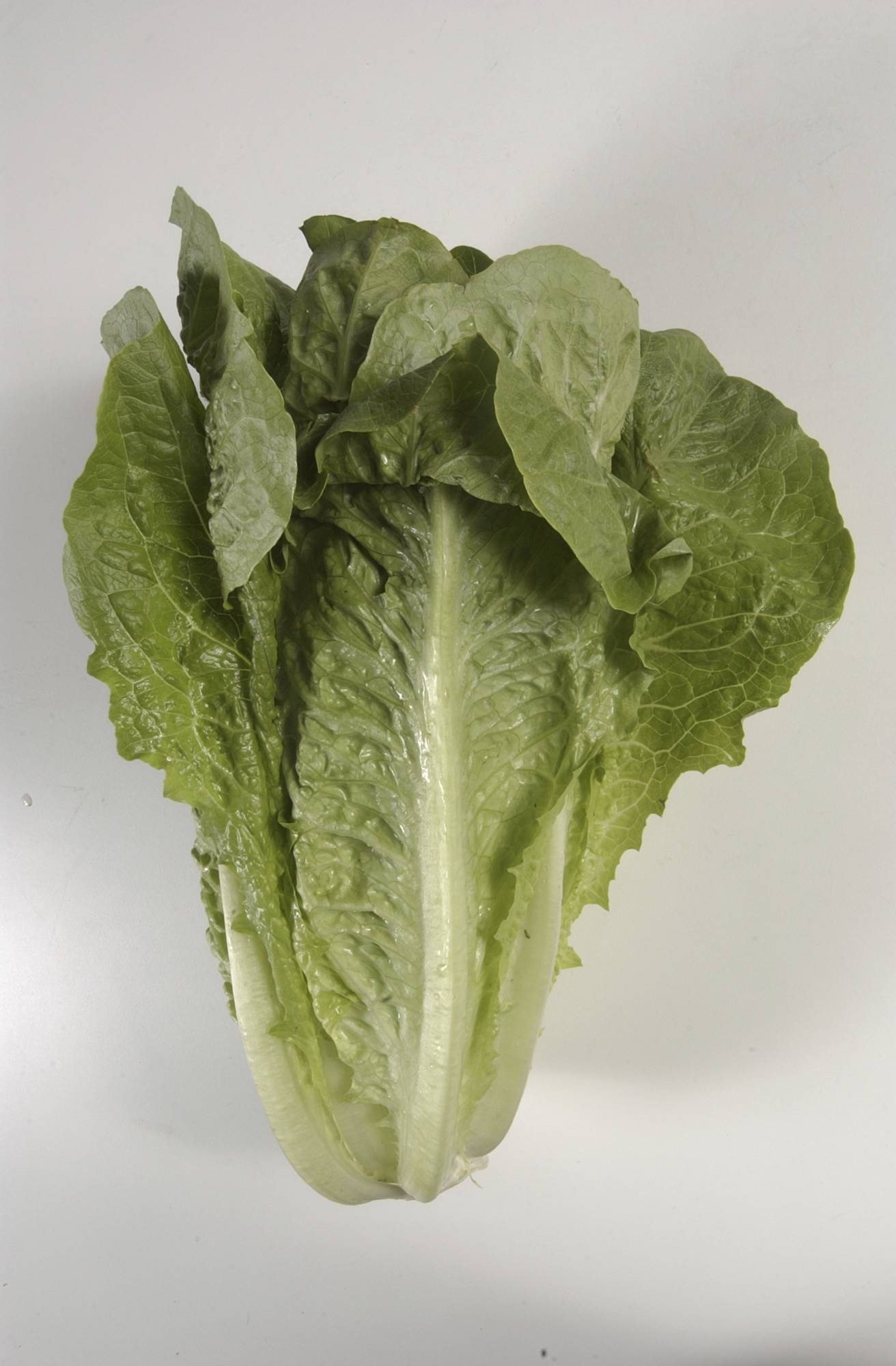 This undated photo shows romaine lettuce shot in the Houston Chronicle newspaper studio. The Centers for Disease Control is expanding a warning about contaminated lettuce from Arizona that has now sickened dozens of people in several states. (Steve Campbell/Houston Chronicle via AP)