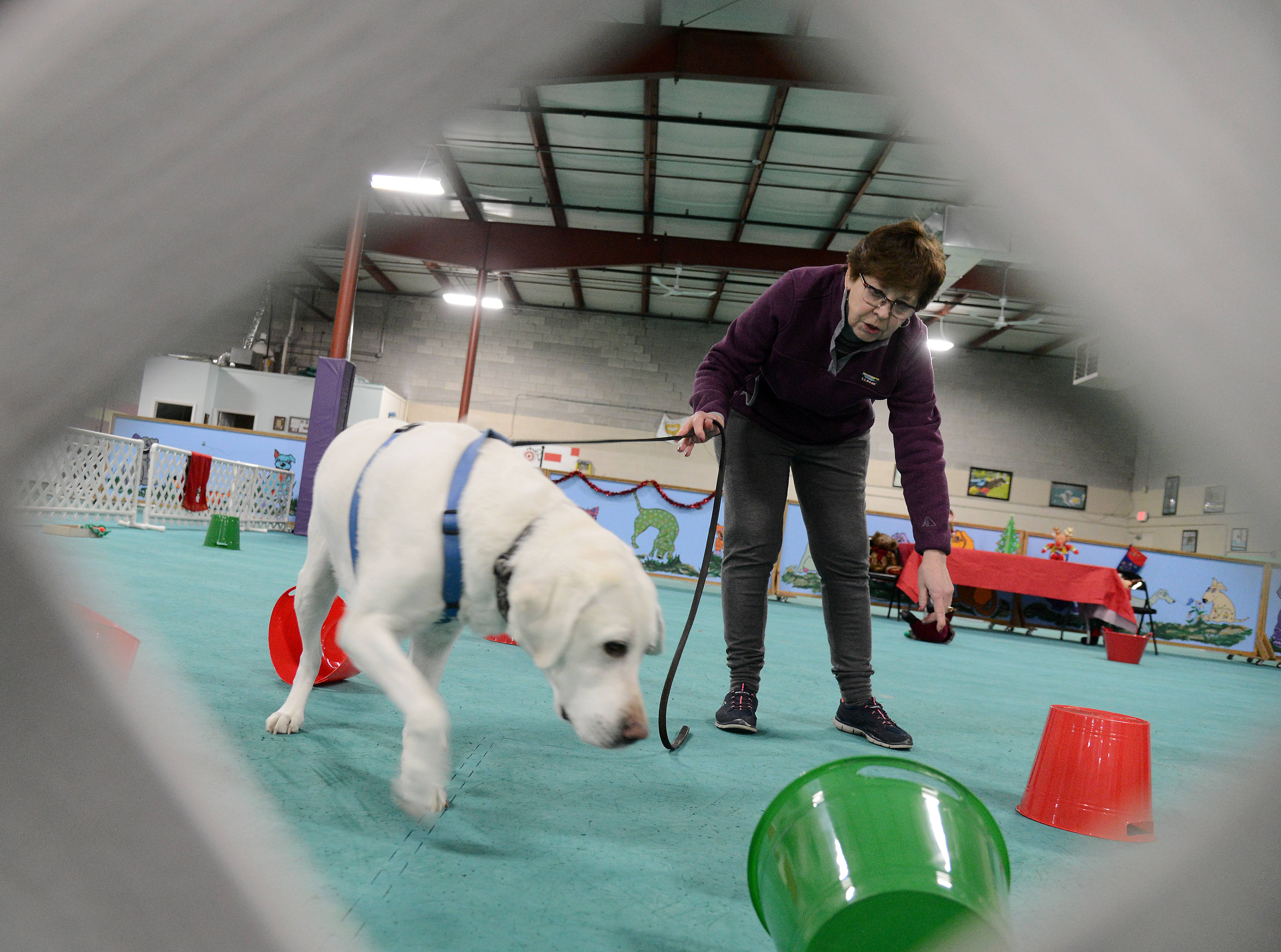 Marilou Haworth and her lab Selah go through a scent test at Car-Dun-Al Dog Obedience Training Club in Huntley.