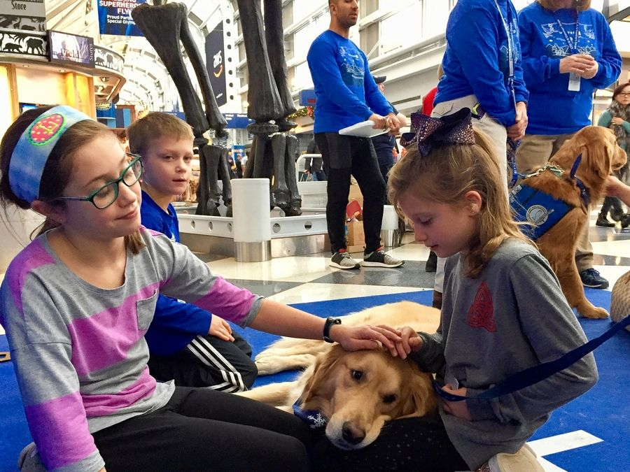 Therapy dog Tobias shares a moment with Lindsay, left, Michael and Molly Forebaugh of Western Springs at O'Hare International Airport Friday.