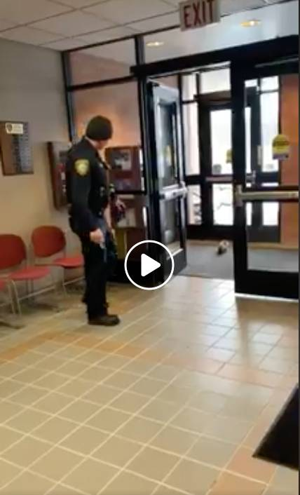 A squirrel tried to barge its way into the McHenry Police Department ­-- and got more than 1.1 million views via the police's Facebook video.