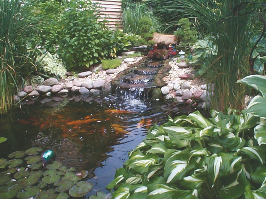 how to maintain your koi pond in winter