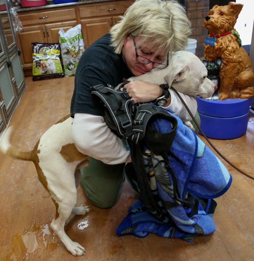 Sherie Gechas of Lisle reunites with her dog, Jackson, Monday at DuPage County Animal Services in Wheaton. Jackson was rescued from a fire Monday morning at D & D Kennels near West Chicago.